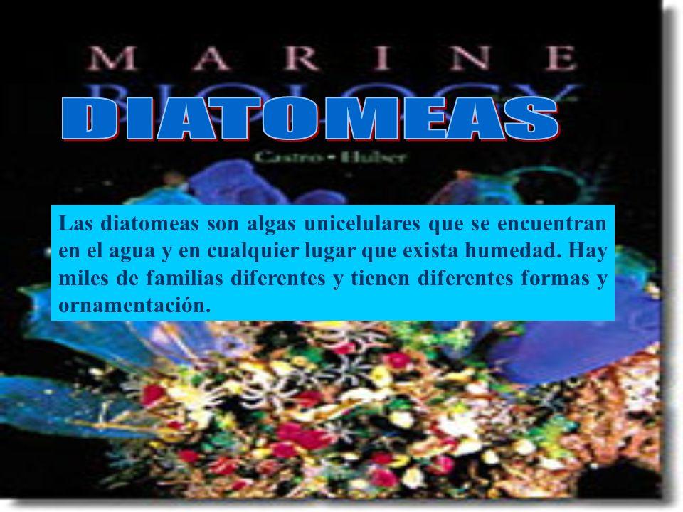 Las diatomeas son algas unicelulares que se encuentran en el agua y en cualquier lugar que exista humedad. Hay miles de familias diferentes y tienen d