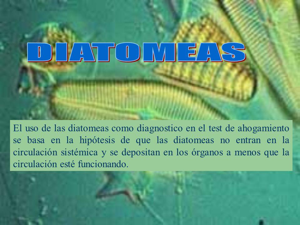 El uso de las diatomeas como diagnostico en el test de ahogamiento se basa en la hipótesis de que las diatomeas no entran en la circulación sistémica
