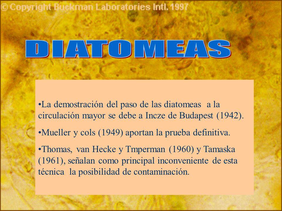 La demostración del paso de las diatomeas a la circulación mayor se debe a Incze de Budapest (1942). Mueller y cols (1949) aportan la prueba definitiv