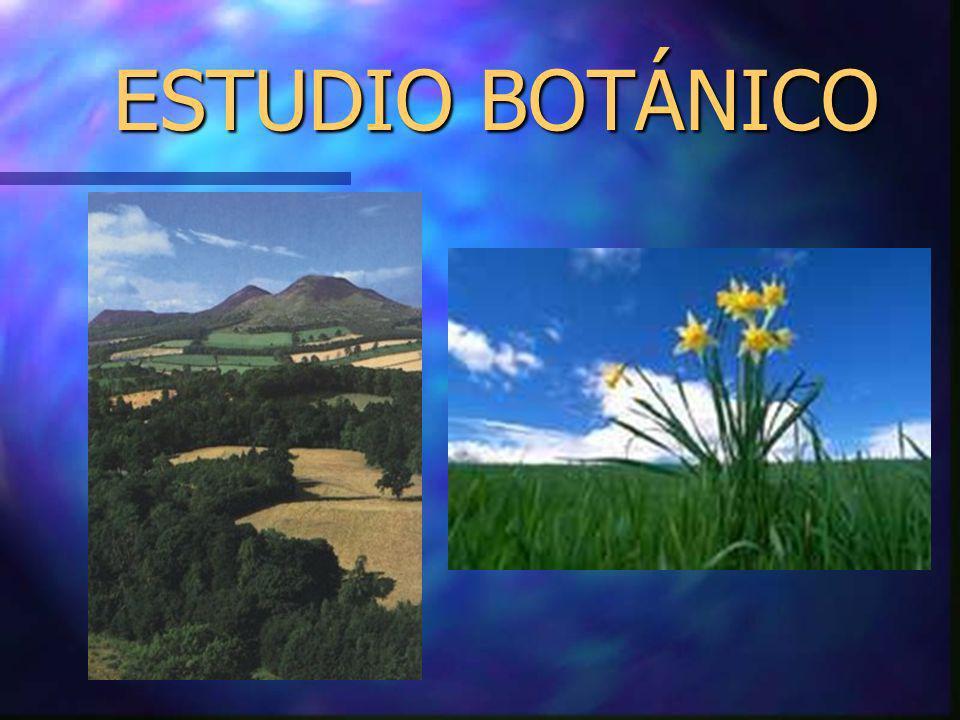 ESTUDIO BOTÁNICO