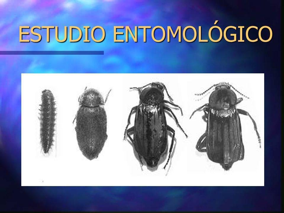 ESTUDIO ENTOMOLÓGICO