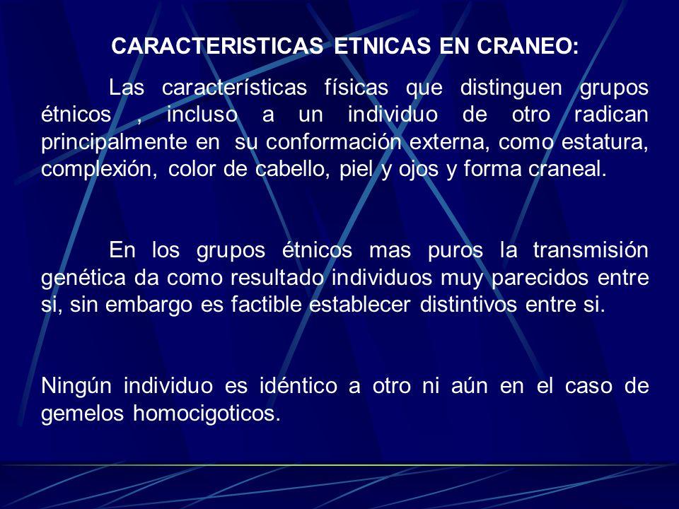 Las características físicas que distinguen grupos étnicos, incluso a un individuo de otro radican principalmente en su conformación externa, como esta