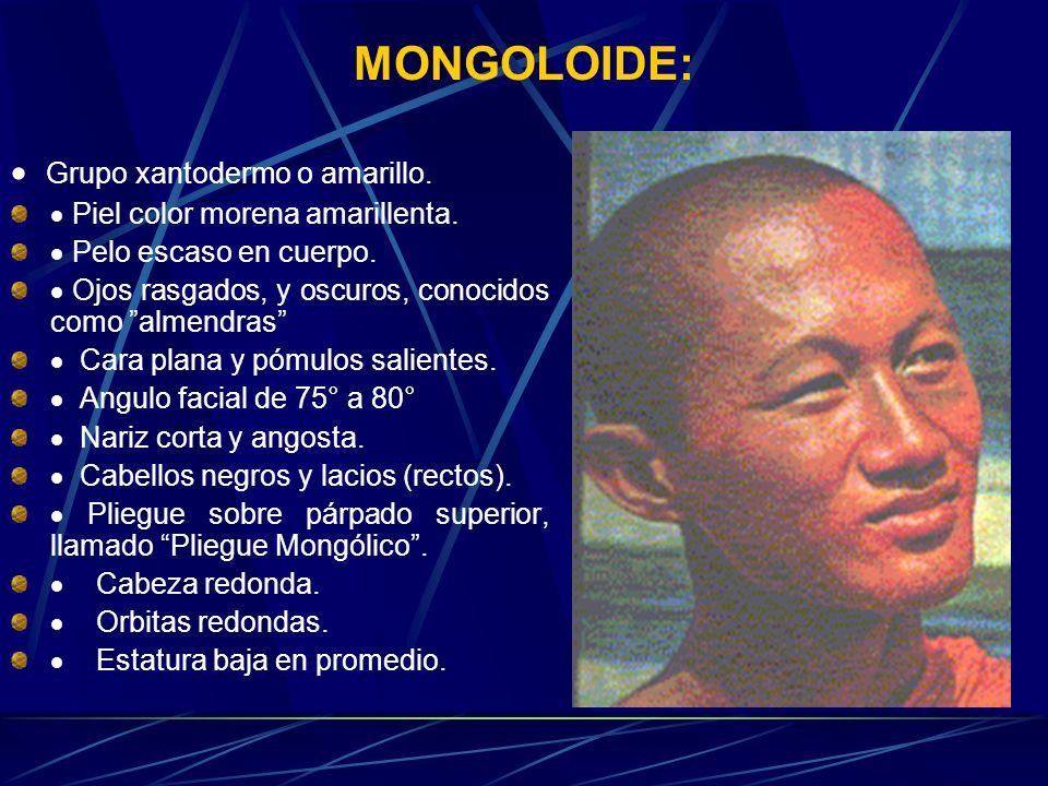 MONGOLOIDE: Grupo xantodermo o amarillo. Piel color morena amarillenta. Pelo escaso en cuerpo. Ojos rasgados, y oscuros, conocidos como almendras Cara