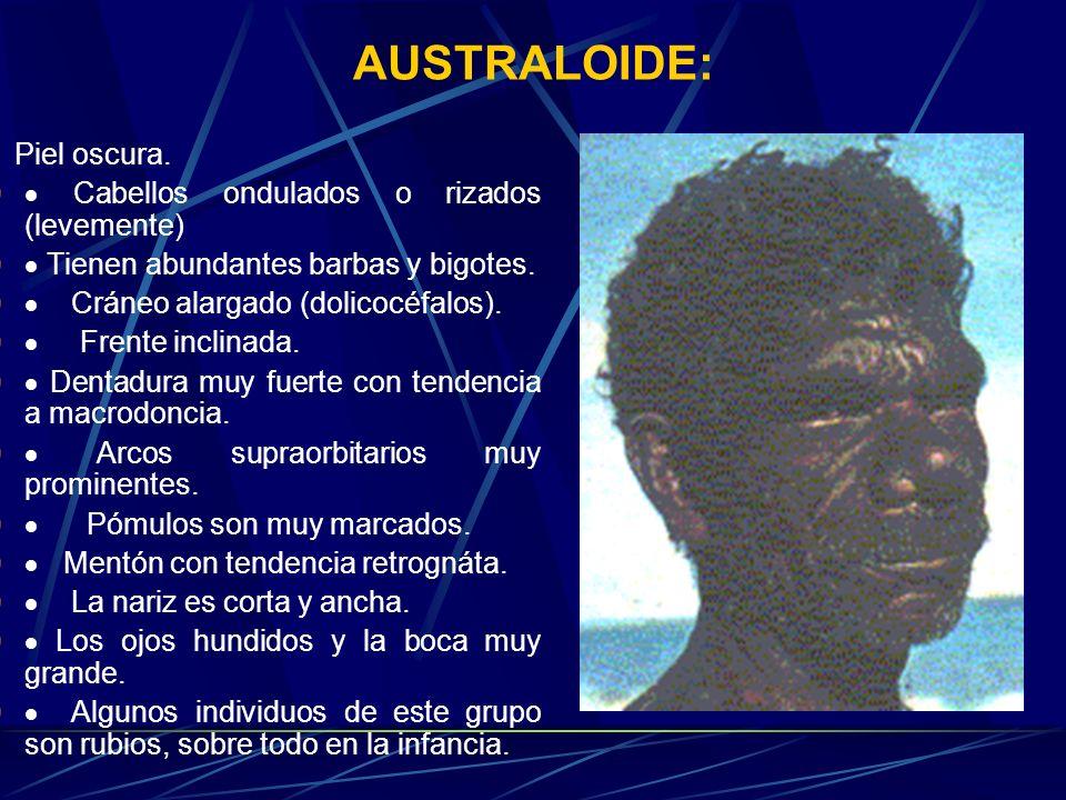 AUSTRALOIDE: Piel oscura. Cabellos ondulados o rizados (levemente) Tienen abundantes barbas y bigotes. Cráneo alargado (dolicocéfalos). Frente inclina