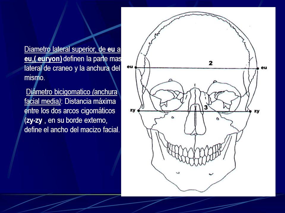 Diametro lateral superior, de eu a eu,( euryon) definen la parte mas lateral de craneo y la anchura del mismo. Diámetro bicigomatico ( anchura facial
