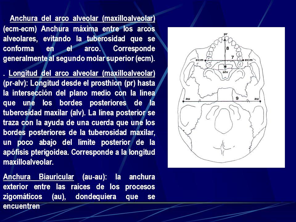 . Anchura del arco alveolar (maxilloalveolar) (ecm-ecm) Anchura máxima entre los arcos alveolares, evitando la tuberosidad que se conforma en el arco.
