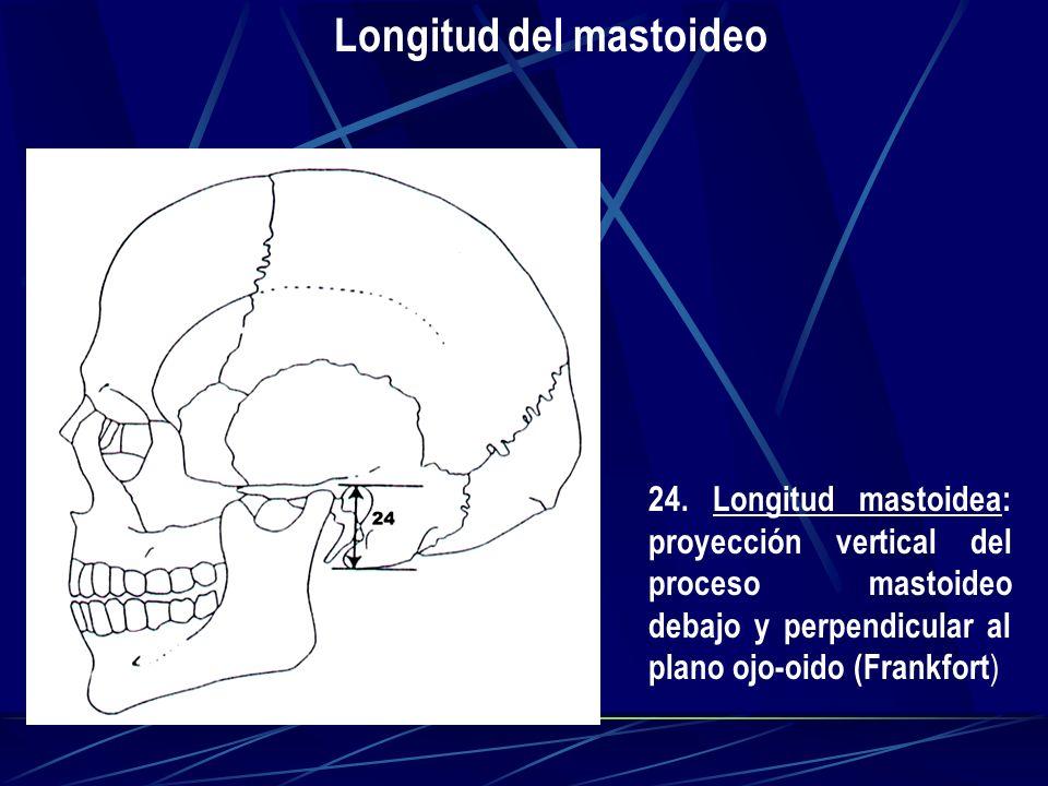 Longitud del mastoideo 24. Longitud mastoidea: proyección vertical del proceso mastoideo debajo y perpendicular al plano ojo-oido (Frankfort )