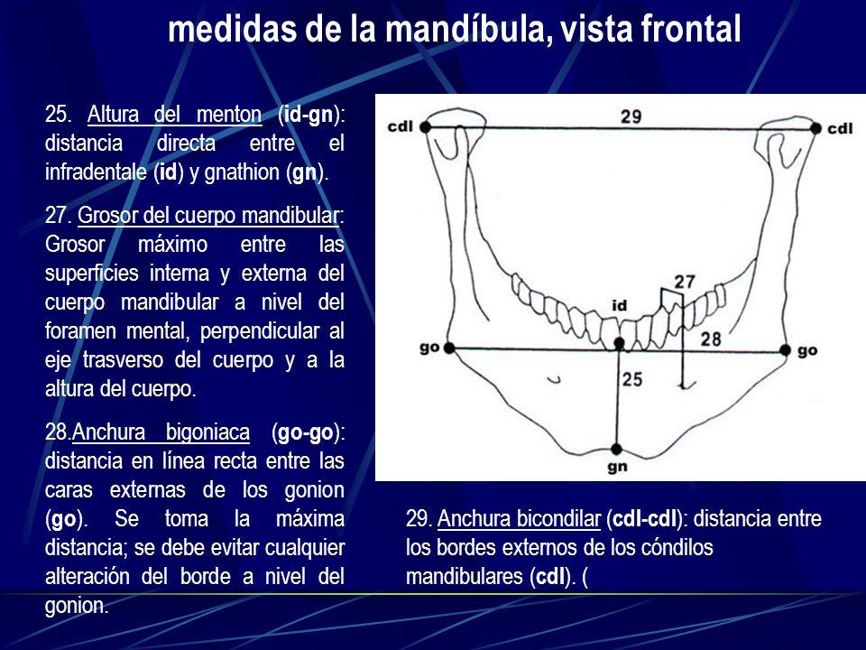 25. Altura del menton ( id-gn ): distancia directa entre el infradentale ( id ) y gnathion ( gn ). 27. Grosor del cuerpo mandibular: Grosor máximo ent