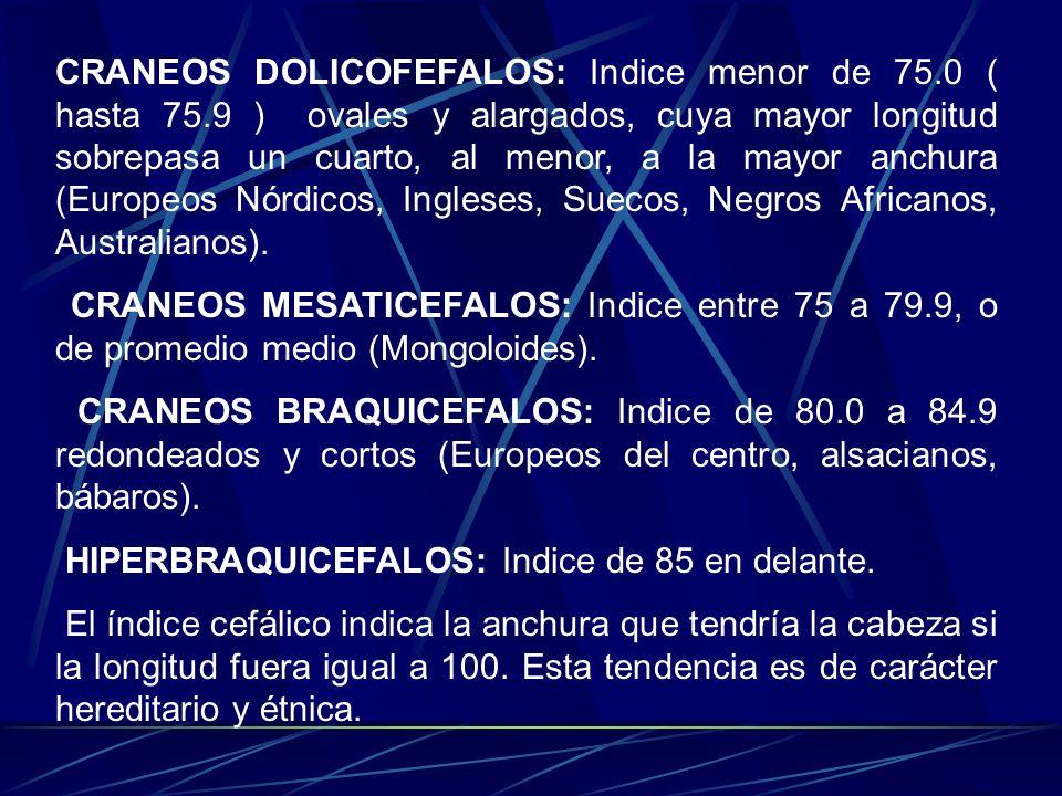 CRANEOS DOLICOFEFALOS: Indice menor de 75.0 ( hasta 75.9 ) ovales y alargados, cuya mayor longitud sobrepasa un cuarto, al menor, a la mayor anchura (