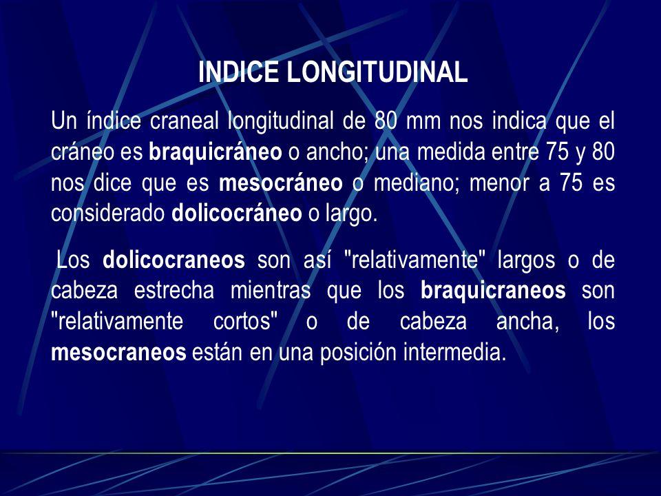 INDICE LONGITUDINAL Un índice craneal longitudinal de 80 mm nos indica que el cráneo es braquicráneo o ancho; una medida entre 75 y 80 nos dice que es
