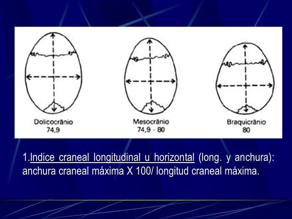 1.Indice craneal longitudinal u horizontal (long. y anchura): anchura craneal máxima X 100/ longitud craneal máxima.