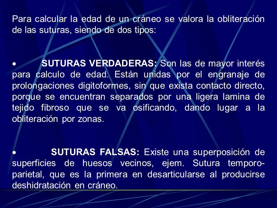 Para calcular la edad de un cráneo se valora la obliteración de las suturas, siendo de dos tipos: SUTURAS VERDADERAS: Son las de mayor interés para ca
