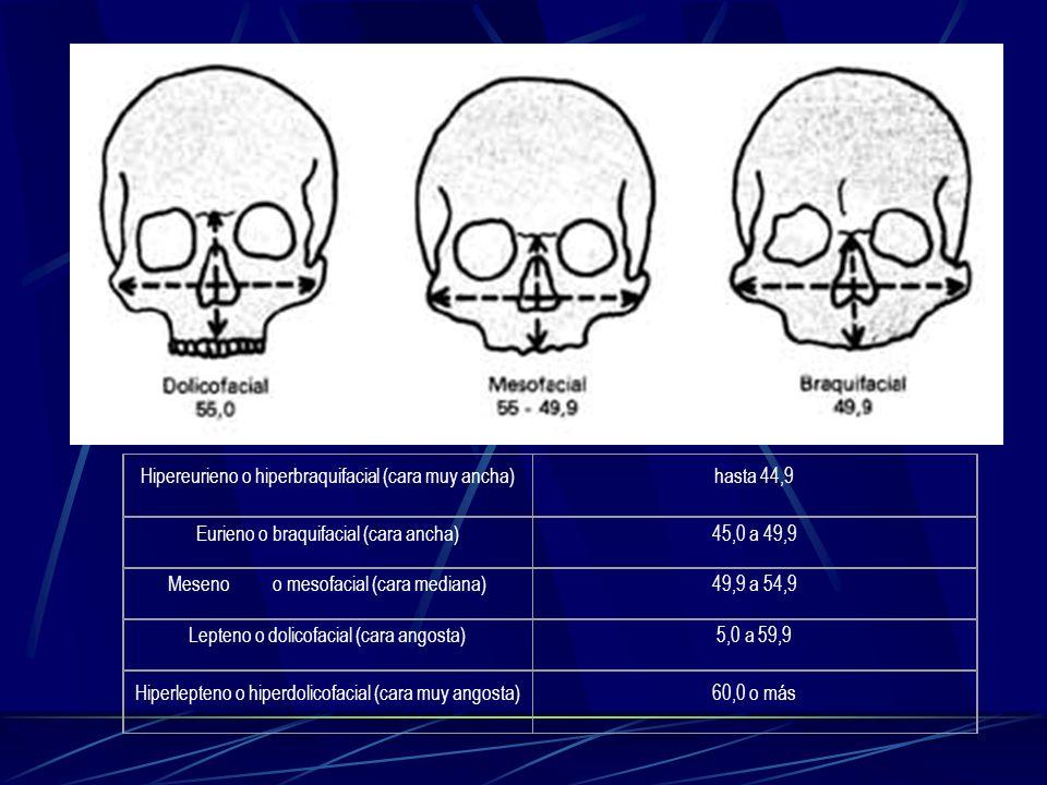 Hipereurieno o hiperbraquifacial (cara muy ancha)hasta 44,9 Eurieno o braquifacial (cara ancha)45,0 a 49,9 Mesenoo mesofacial (cara mediana)49,9 a 54,