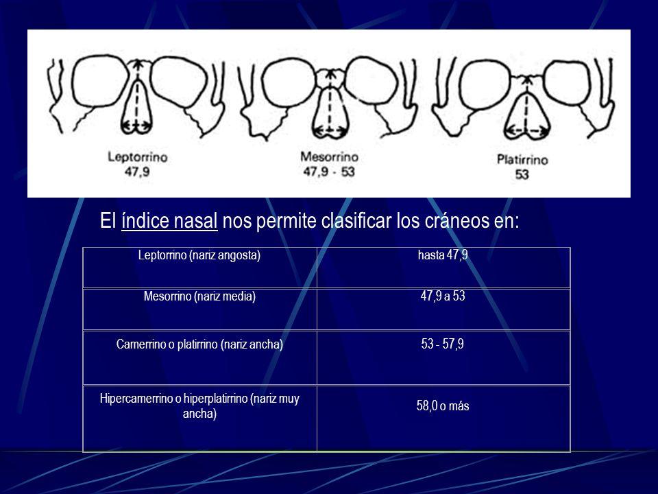 Leptorrino (nariz angosta)hasta 47,9 Mesorrino (nariz media)47,9 a 53 Camerrino o platirrino (nariz ancha)53 - 57,9 Hipercamerrino o hiperplatirrino (