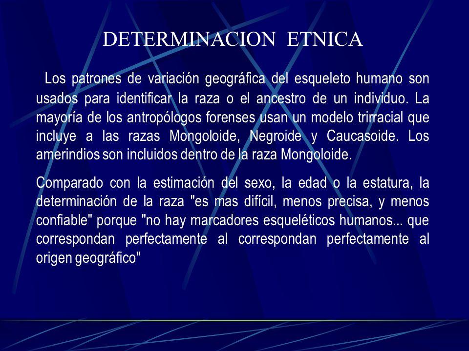 DETERMINACION ETNICA Los patrones de variación geográfica del esqueleto humano son usados para identificar la raza o el ancestro de un individuo. La m