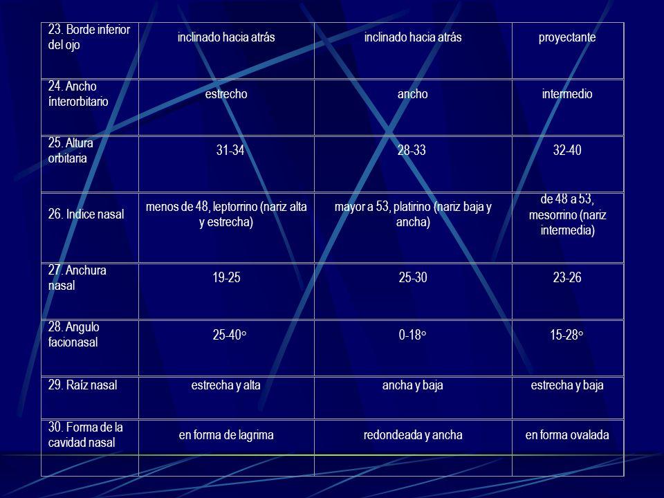 23. Borde inferior del ojo inclinado hacia atrás proyectante 24. Ancho ínterorbitario estrechoanchointermedio 25. Altura orbitaria 31-3428-33 32-40 26