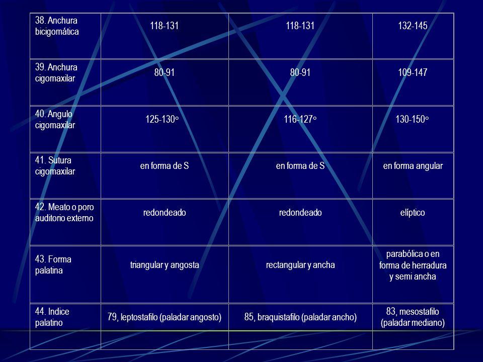 38. Anchura bicigomática 118-131 132-145 39. Anchura cigomaxilar 80-91 109-147 40. Angulo cigomaxilar 125-130° 116-127°130-150° 41. Sutura cigomaxilar