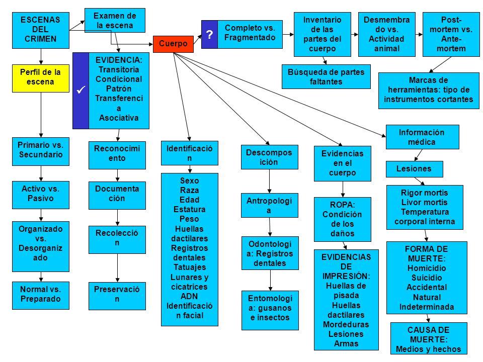 Perfil de la escena Primario vs. Secundario Activo vs. Pasivo Organizado vs. Desorganiz ado Normal vs. Preparado Examen de la escena ESCENAS DEL CRIME
