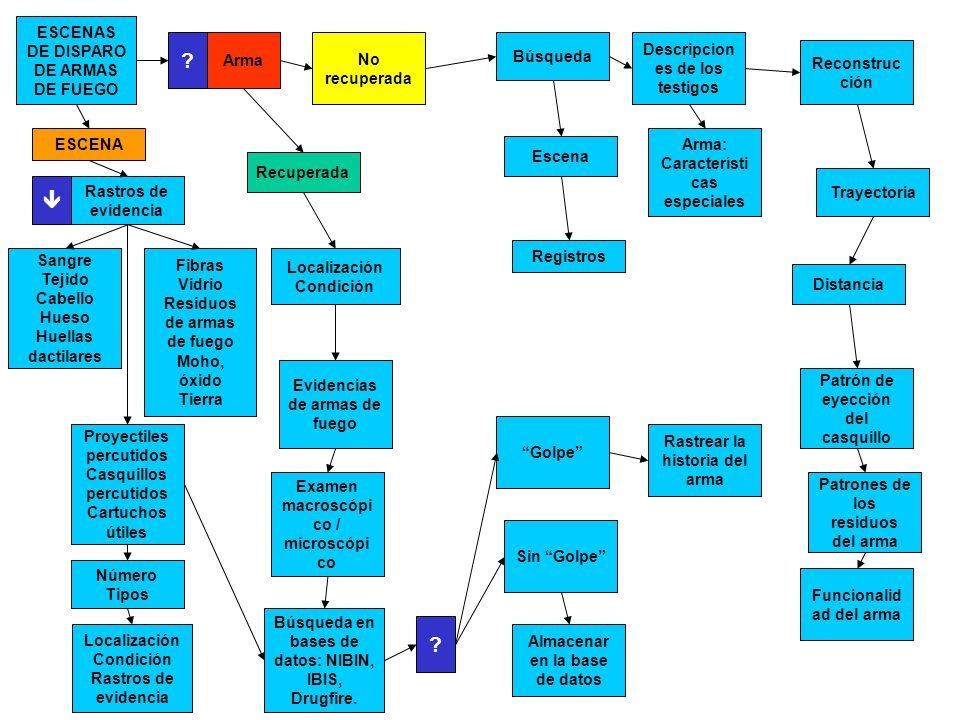 INSCRIPCION DE CODIGOS RELACIONALES SIMBOLOGIA BASICA =Persona =Conexiones = Vínculo comprobado = Vínculo probable = Sospecha que sea la misma persona = Organización XY XZ XT XZXY Continua.- Confirmada Relación sospechosa