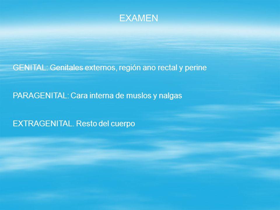 EXAMEN GENITAL: Genitales externos, región ano rectal y perine PARAGENITAL: Cara interna de muslos y nalgas EXTRAGENITAL. Resto del cuerpo