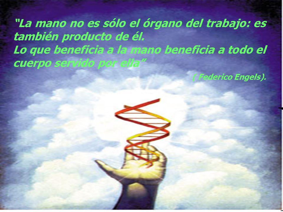 La mano no es sólo el órgano del trabajo: es también producto de él. Lo que beneficia a la mano beneficia a todo el cuerpo servido por ella ( Federico