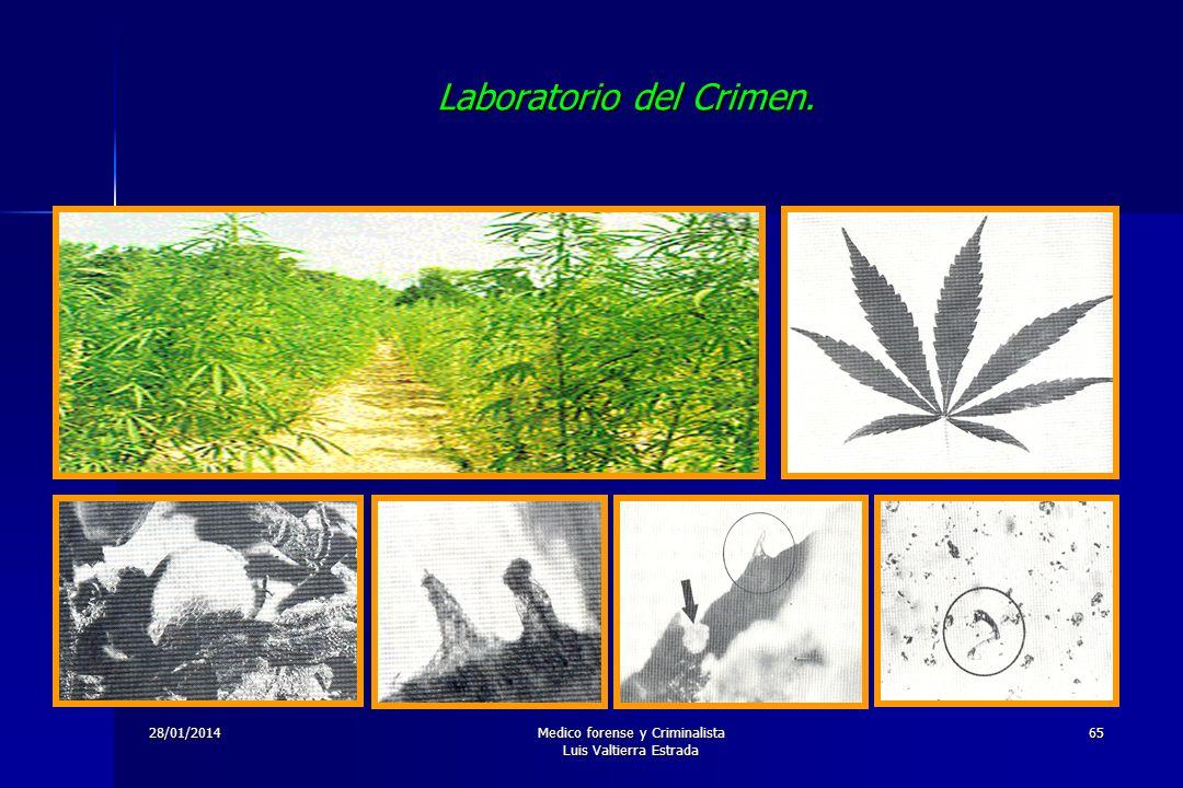 28/01/2014Medico forense y Criminalista Luis Valtierra Estrada 65 Laboratorio del Crimen.