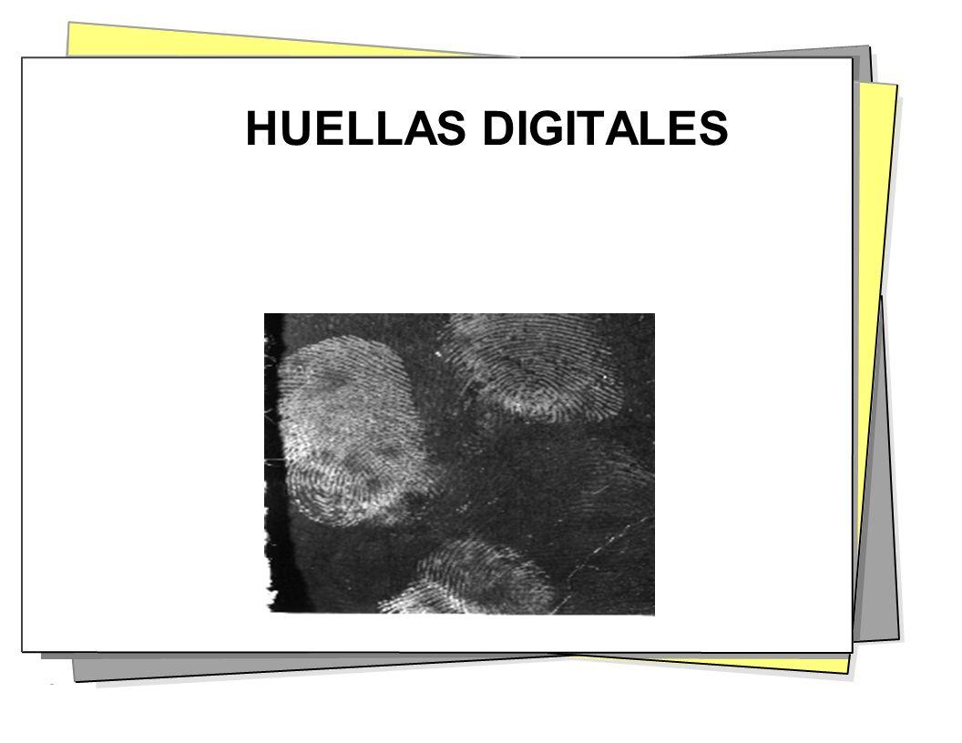 TOMANDO HUELLAS Anatomía de los brazos – Dos huesos principales de los antebrazos.