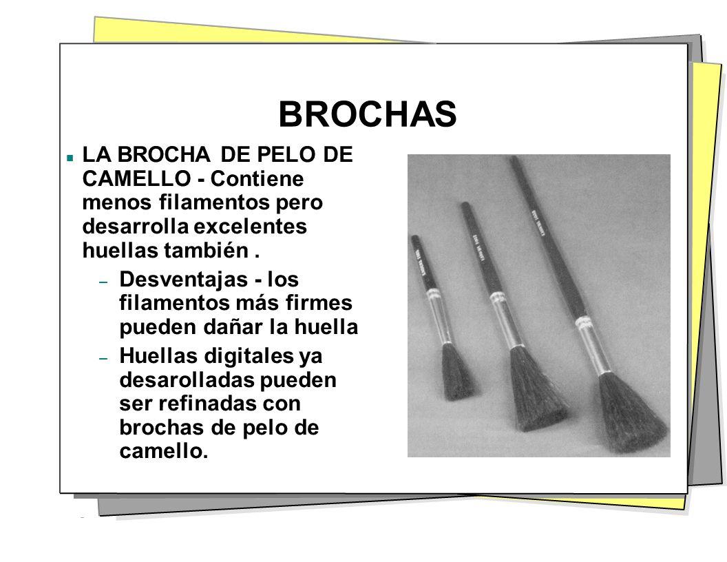 BROCHAS LA BROCHA DE PELO DE CAMELLO - Contiene menos filamentos pero desarrolla excelentes huellas también. – Desventajas - los filamentos más firmes