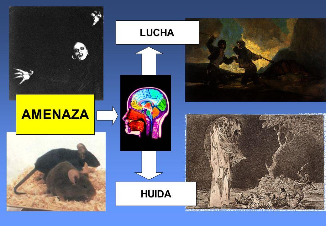 HUIDA LUCHA AMENAZA