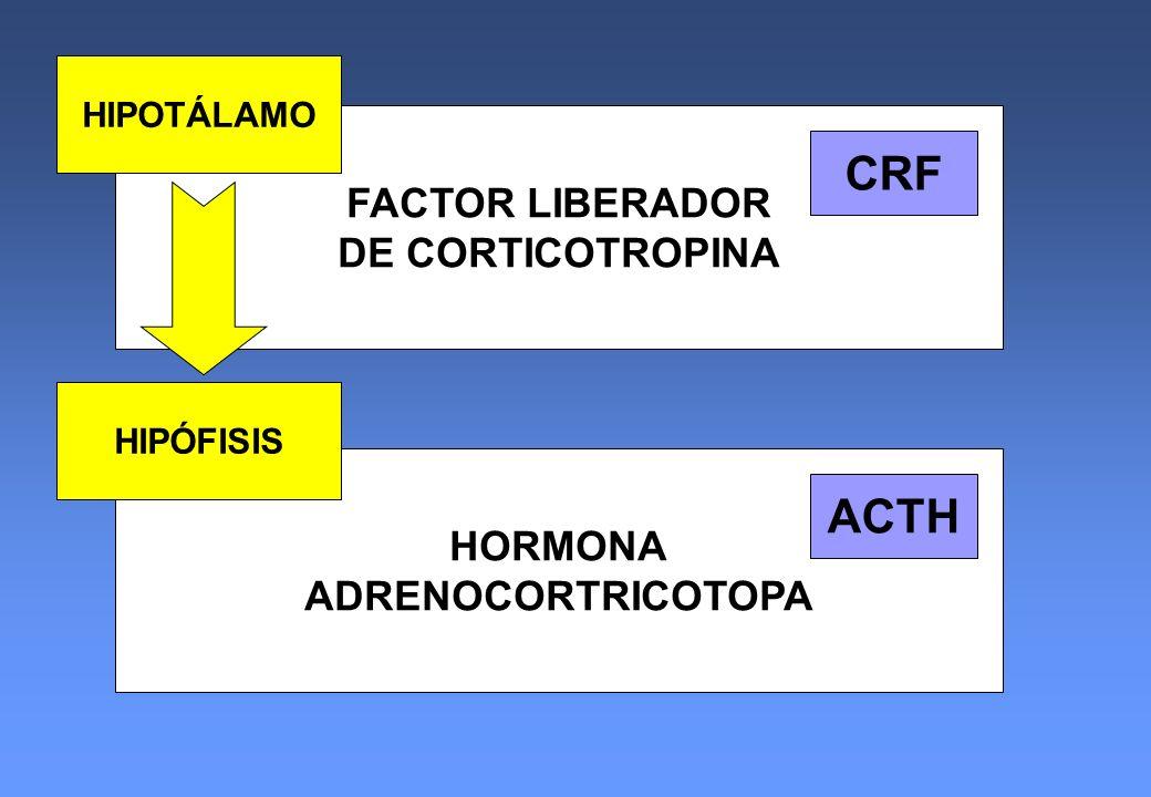 FACTOR LIBERADOR DE CORTICOTROPINA HORMONA ADRENOCORTRICOTOPA HIPOTÁLAMO HIPÓFISIS CRF ACTH