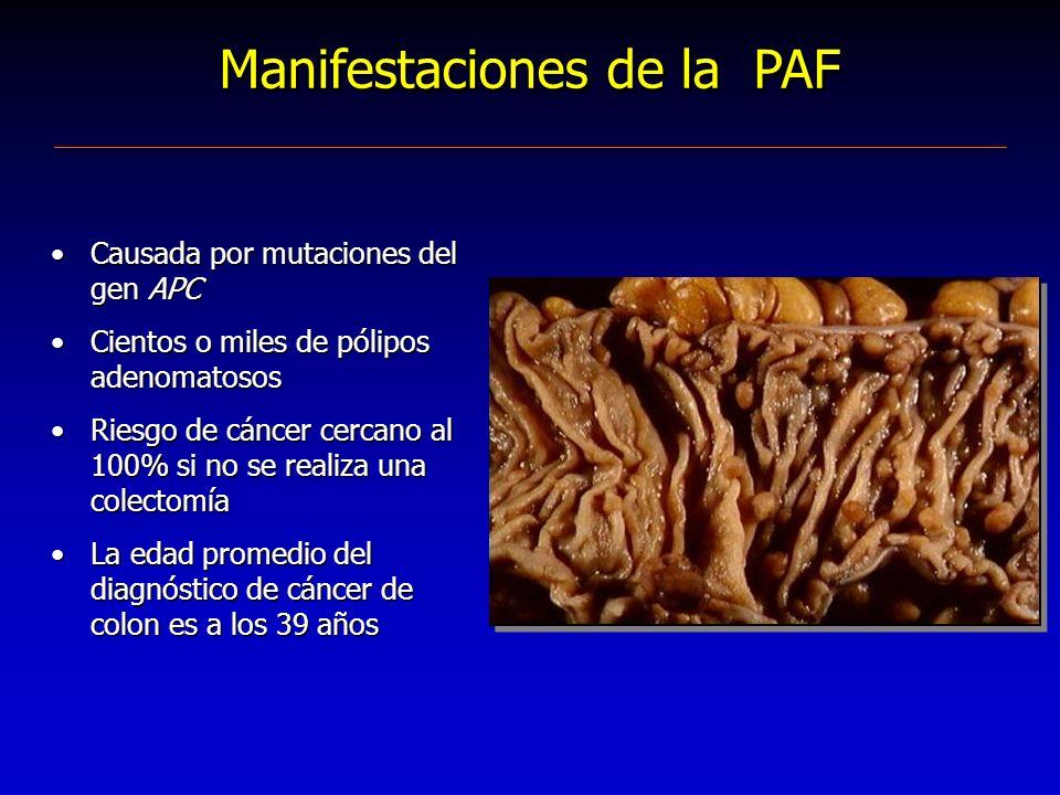Manifestaciones de la PAF Causada por mutaciones del gen APC Cientos o miles de pólipos adenomatosos Riesgo de cáncer cercano al 100% si no se realiza