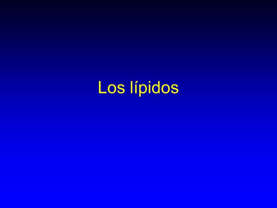 Los lípidos