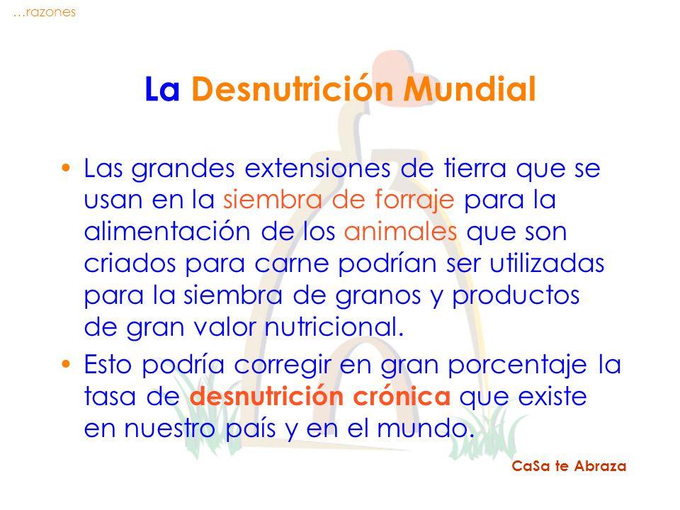 La Desnutrición Mundial Las grandes extensiones de tierra que se usan en la siembra de forraje para la alimentación de los animales que son criados pa