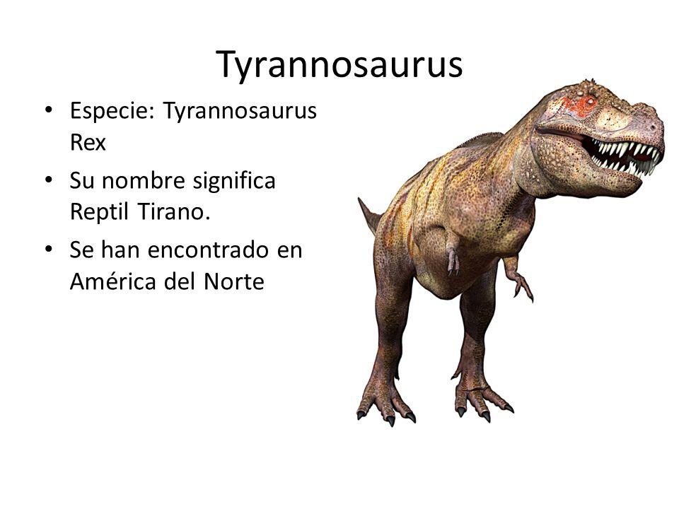 Tyrannosaurus Especie: Tyrannosaurus Rex Su nombre significa Reptil Tirano. Se han encontrado en América del Norte