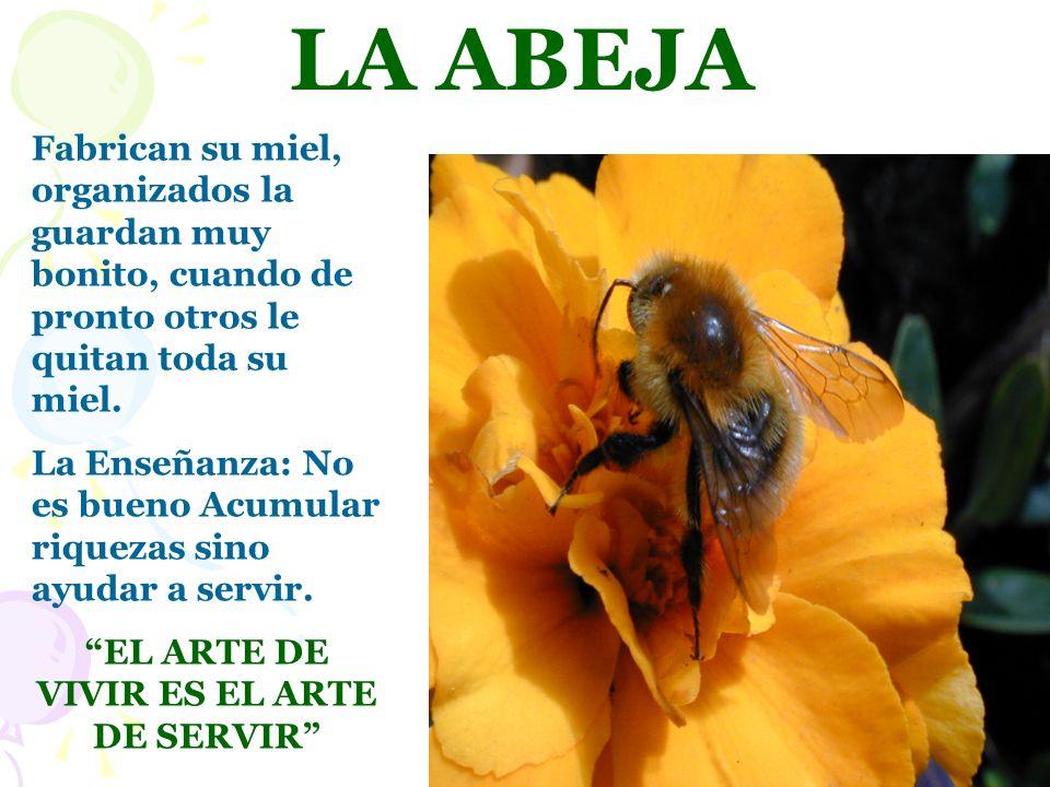 LA ABEJA Fabrican su miel, organizados la guardan muy bonito, cuando de pronto otros le quitan toda su miel. La Enseñanza: No es bueno Acumular riquez