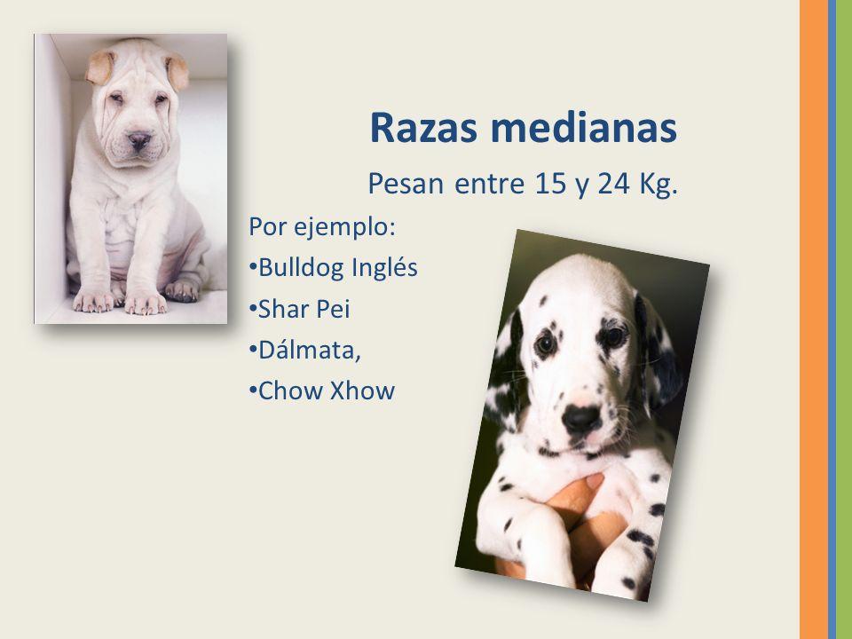 Razas medianas Pesan entre 15 y 24 Kg. Por ejemplo: Bulldog Inglés Shar Pei Dálmata, Chow Xhow