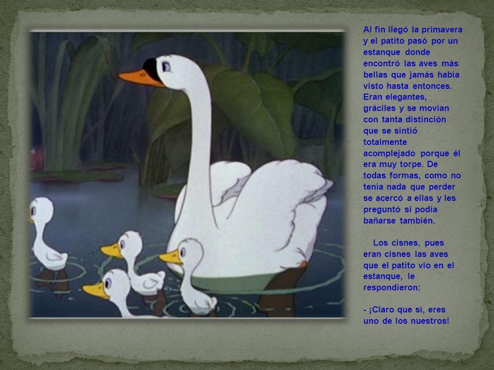 Al fin llegó la primavera y el patito pasó por un estanque donde encontró las aves más bellas que jamás había visto hasta entonces. Eran elegantes, gr