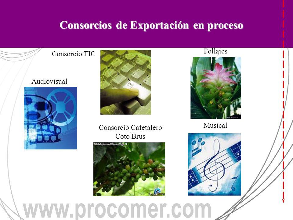 CONSORCIOS DE EXPORTACIÓN EN PROCESO Consorcio Cafetalero Coto Brus Plantas, Flores y Follajes Consorcio TIC Audiovisual Musical Consorcios de Exportación en proceso Consorcio TIC