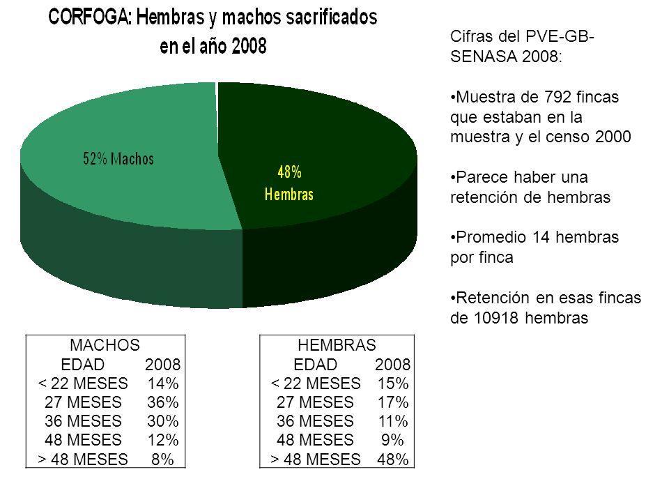 Cifras del PVE-GB- SENASA 2008: Muestra de 792 fincas que estaban en la muestra y el censo 2000 Parece haber una retención de hembras Promedio 14 hemb