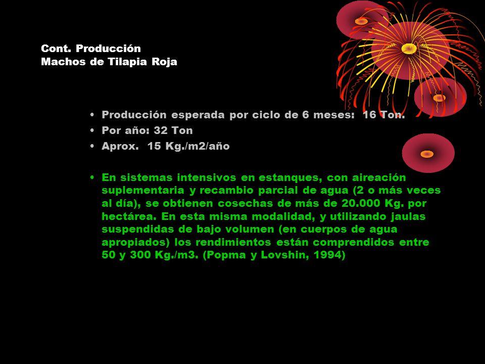Cont. Producción Machos de Tilapia Roja Producción esperada por ciclo de 6 meses: 16 Ton. Por año: 32 Ton Aprox. 15 Kg./m2/año En sistemas intensivos