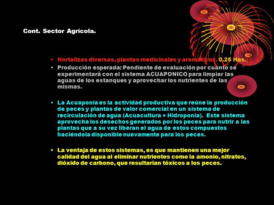 Cont. Sector Agrícola. Hortalizas diversas, plantas medicinales y aromáticas. 0.25 Has. Producción esperada: Pendiente de evaluación por cuanto se exp