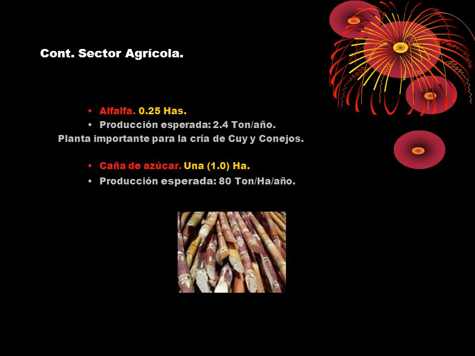Cont. Sector Agrícola. Alfalfa. 0.25 Has. Producción esperada: 2.4 Ton/año. Planta importante para la cría de Cuy y Conejos. Caña de azúcar. Una (1.0)