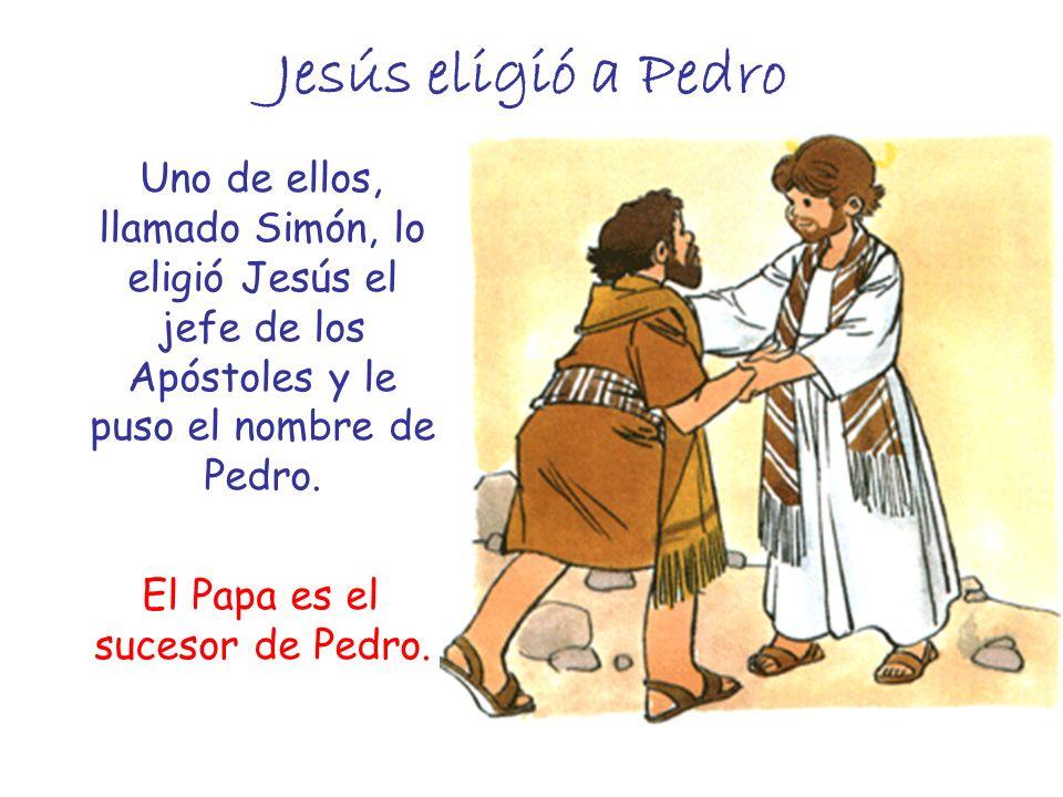 Jesús eligió a Pedro Uno de ellos, llamado Simón, lo eligió Jesús el jefe de los Apóstoles y le puso el nombre de Pedro. El Papa es el sucesor de Pedr