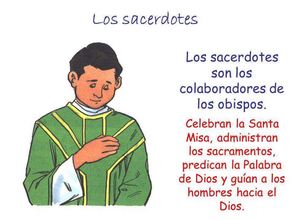 Los sacerdotes Los sacerdotes son los colaboradores de los obispos. Celebran la Santa Misa, administran los sacramentos, predican la Palabra de Dios y