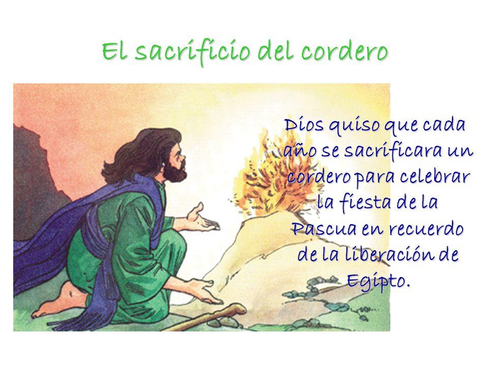 El sacrificio del cordero Dios quiso que cada año se sacrificara un cordero para celebrar la fiesta de la Pascua en recuerdo de la liberación de Egipt