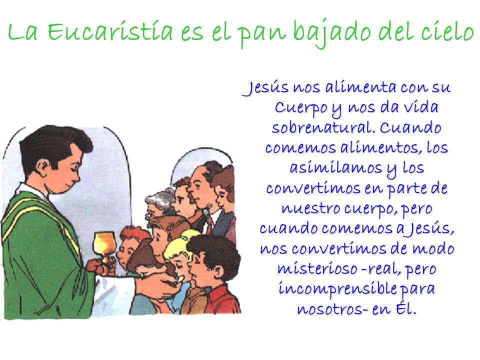 La Eucaristía es el pan bajado del cielo Jesús nos alimenta con su Cuerpo y nos da vida sobrenatural. Cuando comemos alimentos, los asimilamos y los c