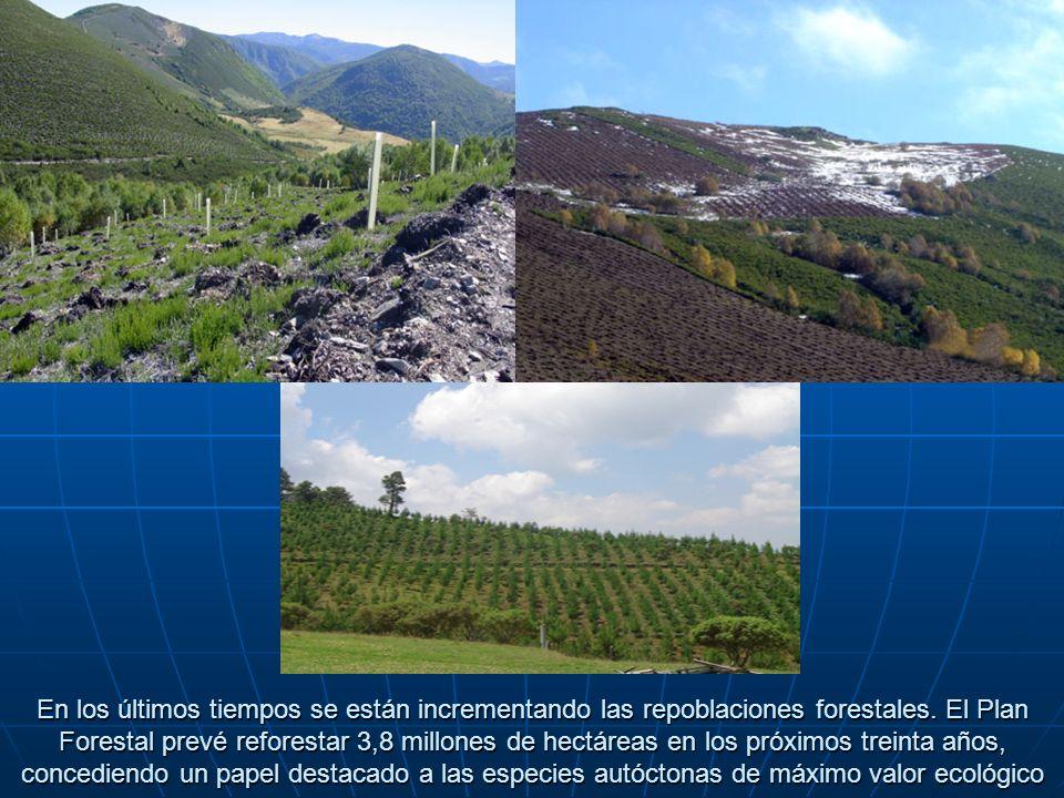 En los últimos tiempos se están incrementando las repoblaciones forestales. El Plan Forestal prevé reforestar 3,8 millones de hectáreas en los próximo