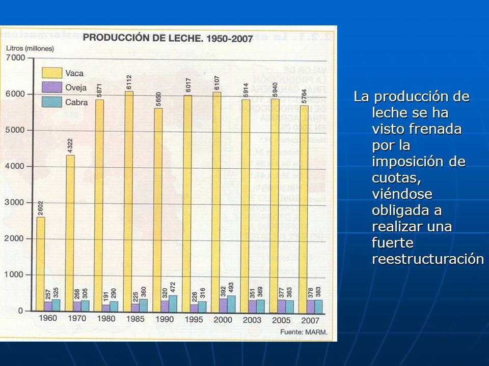La producción de leche se ha visto frenada por la imposición de cuotas, viéndose obligada a realizar una fuerte reestructuración