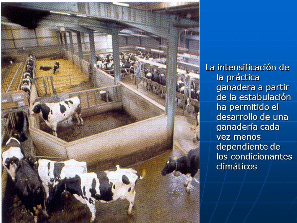 La intensificación de la práctica ganadera a partir de la estabulación ha permitido el desarrollo de una ganadería cada vez menos dependiente de los c