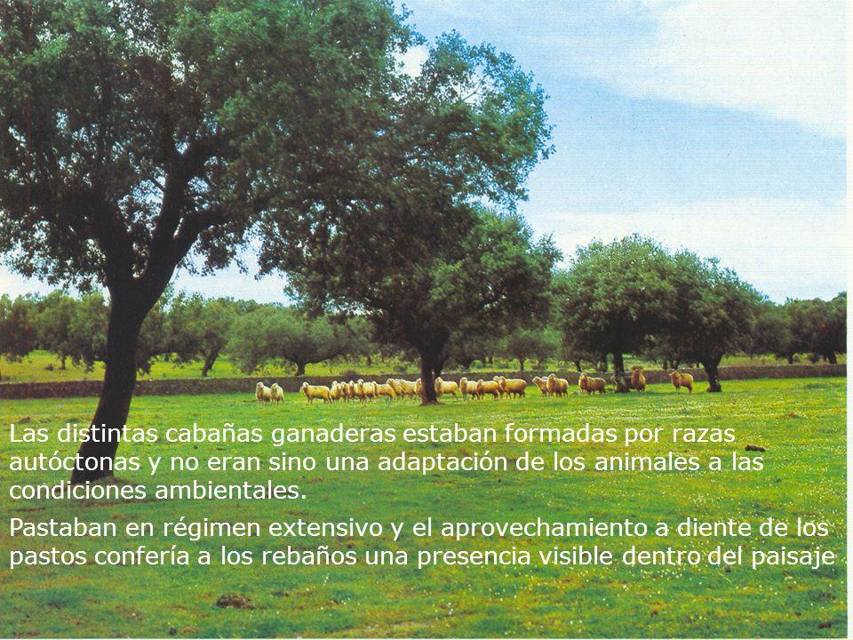 Las distintas cabañas ganaderas estaban formadas por razas autóctonas y no eran sino una adaptación de los animales a las condiciones ambientales. Pas